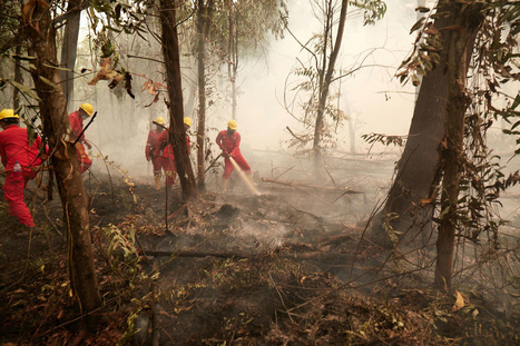 """Indonesia bans peatlands destruction (""""where are the wetlands? restoration not always possible"""")   Earth Citizens Perspective   Scoop.it"""