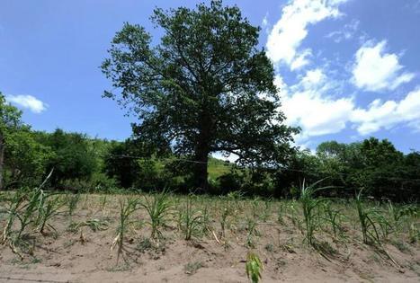 Face aux aléas du climat, l'assurance s'ajuste aux paysans les plus pauvres | Questions de développement ... | Scoop.it