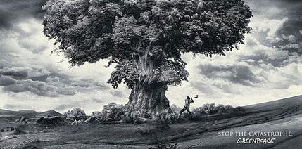 Detener la tala de árboles, evitar una catástrofe   LA DESFORESTACION DE ARBOLES   Scoop.it