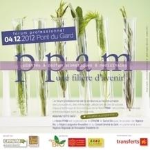 Forum Professionnel Plantes à parfum, aromatiques et médicinales - 4 déc. au Pont du Gard   Évènements   Scoop.it