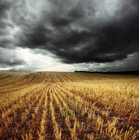 The Dark Side of Wheat - New Perspectives On Celiac Disease and Wheat Intolerance - by Sayer Ji | naturopath | Scoop.it