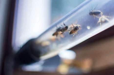 BEEcosystem creators looking to create a buzz about bees | Sustainable Futures | Scoop.it