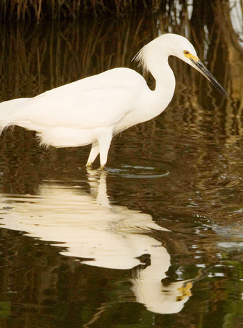 Wading Bird Nesting in Key U.S. Area Plummets 39 Percent Below 10-Year Average | Upsetment | Scoop.it