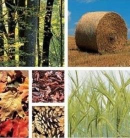 Biomasa, la estrella emergente de las energías renovables en un curso de SEAS | Infraestructura Sostenible | Scoop.it