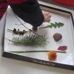 Our nature shadow boxes in preschool | Teach Preschool | Scoop.it
