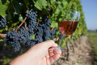Appel à la prudence sur la production de rosés | Le vin quotidien | Scoop.it