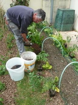La main verte. Culture de la tomate, la star du potager ! - Le Progrès | EDEN | Scoop.it