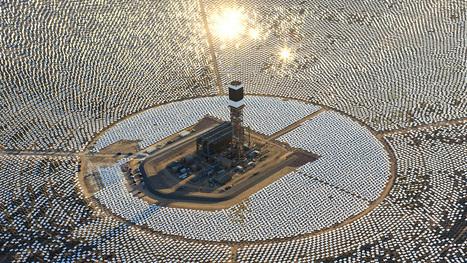 Empresa de energia solar quer compensar a fritura de pássaros com a castração de gatos | Technology Empowering People | Scoop.it