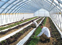 Reno News &amp; Review - <br/><br/>High hopes - Green - November 28, 2013 | Vertical Farm - Food Factory | Scoop.it