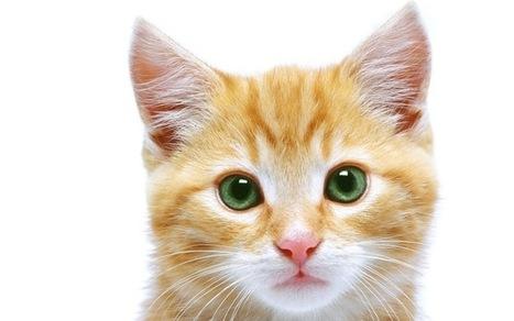 10 mitos de los gatos que no conocías | Mas mascotas | Scoop.it