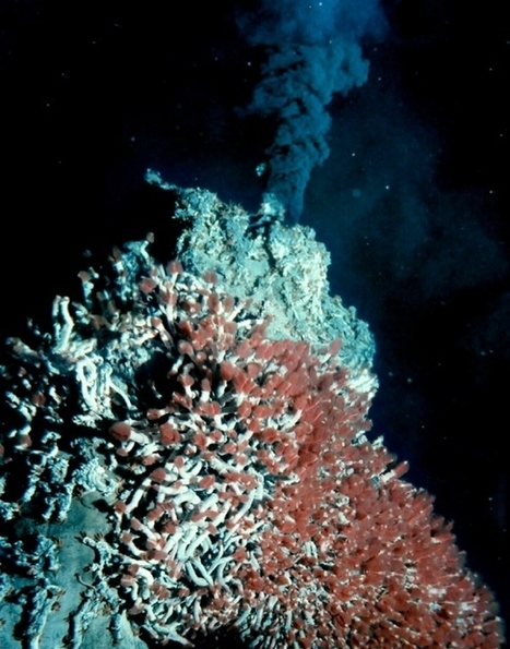 Microbes Buried Deep in Ocean Crust May Form World's Largest Ecosystem | Water Stewardship | Scoop.it