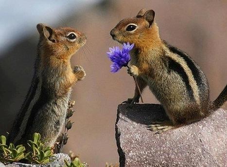Ζώα… τρελά ερωτευμένα! | Γεωπονικά | Scoop.it