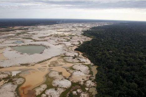 Les humains ont détruit un dixième de la nature en 25 ans | Biodiversity protection | Scoop.it