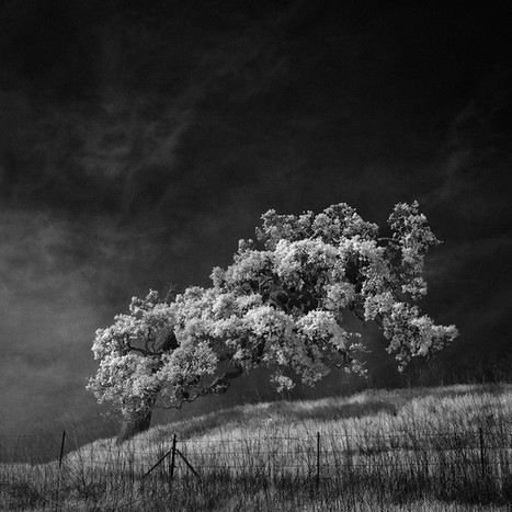 Infrared Camera Captures the Poetically Desolate Landscapes of Northern California | Le It e Amo ✪ | Scoop.it