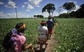 Antropólogos alertam para ataques a direitos indígenas: 'toda sociedade está em risco' | Agua | Scoop.it