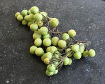 B.A.B.A. DE LA CUISINE THAÏ ~ Dossier ~ Tomate Cerise ~ | cuisine végétale et bio au quotidien | Scoop.it