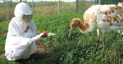 11 odd ways we protect endangered species | Biodiversity protection | Scoop.it