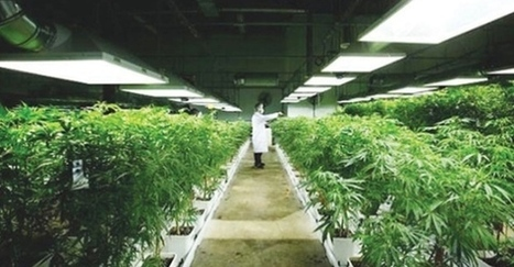 Marijuana Compound Found Superior To Drugs For Alzheimer's - | Cannabinoid Issues | Scoop.it