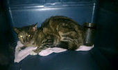 Bunny's Blog: The Miraculous Rescue of Jar Kitty | Pet News | Scoop.it