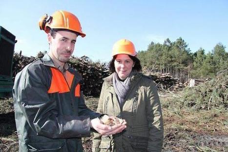 Pays de la Loire. Un marché bois énergie en plein essor | Salon Bois Energie du 12 au 22 mars 2015 à Nantes | Scoop.it