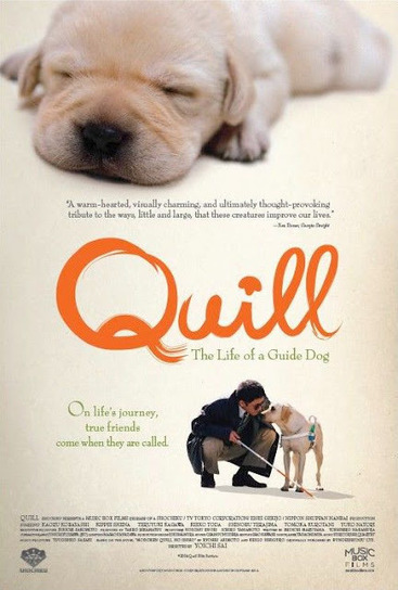Free Movie Download: Quill: The Life of a Guide Dog Download Free | Crystal's movies | Scoop.it