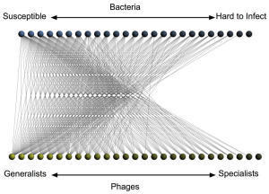 Microbe vs. microbe: Meta-analysis reveals patterns of bacteria-virus infection networks | MicrobiologyBytes | Scoop.it