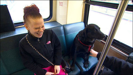 Independent Dog Rides the Bus by Herself to the Park | Xposed | Scoop.it