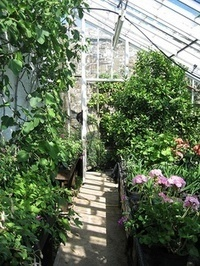 Making Your Greenhouse a Homely Green Haven - Lavenderworld | Lavender | Scoop.it