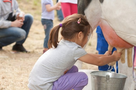 Raw Milk Reality: Is Raw Milk Worth the Risk?   LOCAL HEALTH TRADITIONS   Scoop.it