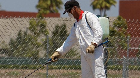 When To Hire A Professional Pest Inspector   Interesting from Web   Scoop.it