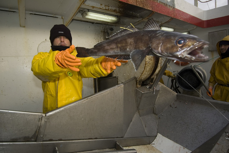 That Fish on Your Dinner Plate May Be an Endangered Species | Biodiversity protection | Scoop.it