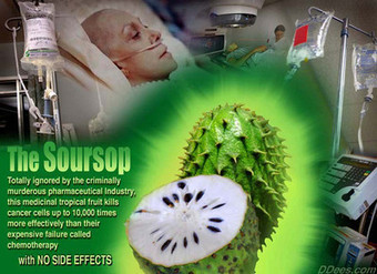 Soursop Fruit 100 fold stronger at killing cancer than chemotherapy | Global politics | Scoop.it