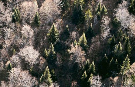 Biodiversité: l'Amazonie moins  en danger que les forêts boréales | Biodiversité & Relations Homme - Nature - Environnement : Un Scoop.it du Muséum de Toulouse | Scoop.it