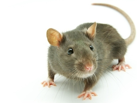 Best Pest Control - Pest Inspections & Removal in Blacktown, Castle Hill, Liverpool, Penrith, St Marys, Parramatta, Hills District, Rouse Hill, Hawkesbury, Nepean and Western Sydney - Matthew Lynch... | pest control blacktown | Scoop.it