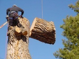 Guide to Tree Removal Costs & Prices | Tree Removal Tips in Dallas Ga | Scoop.it