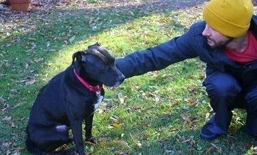 6 Dog Behavior Myths, Debunked | Care2 Healthy Living | Molosser Dog World | Big Dogs, Real Talk . . . No Fluff. | Scoop.it