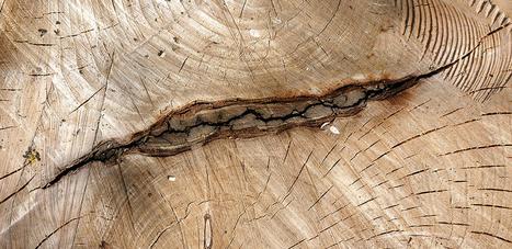 Travail du bois pour les débutants : quel bois - La Pièce en Bois | Quand débuter dans le travail du bois n'a jamais été aussi facile | Scoop.it