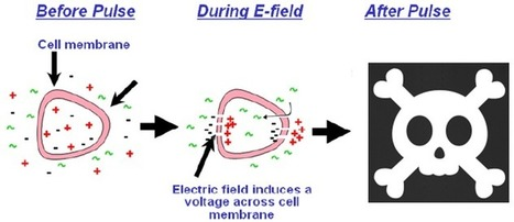 Electrical pulse treatment pokes tiny holes to kill cancer   KurzweilAI   Embodied Zeitgeist   Scoop.it