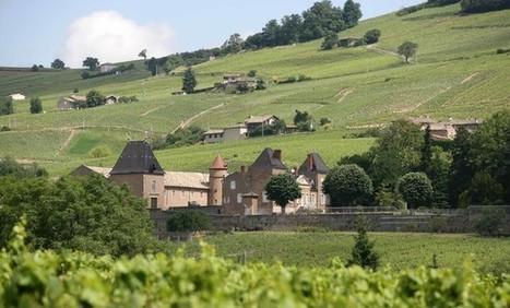 Beaujolais nouveau : un marketing à 1,5 million d'euros - LyonCapitale.fr | Marketing du vin | Scoop.it