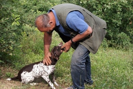 A Friend Is a Treasure: Who Finds a Friend Finds a Truffle | Le Marche another Italy | Scoop.it
