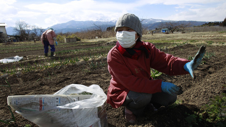 Brave People Are Building Futuristic Farms on Japan's Radioactive Soil - Gizmodo | Shift Soil Remediation | Scoop.it