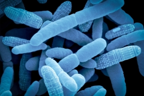 "Reprogramming gut bacteria as ""living therapeutics"" 