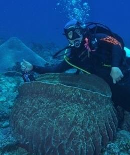 New species found in 'last frontier' | Australian environment | Scoop.it