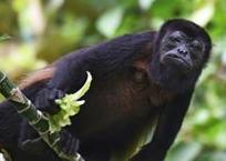 Une île du canal de Panama devenue la Mecque de la biologie tropicale | Sociétés & Environnements | Scoop.it