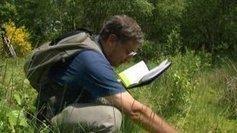 Des espèces végétales menacées ou disparues dans le Limousin | Veille écologique | Scoop.it