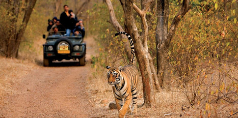 Plans for Night Tourism in Ranthambore National Park | India Travel & Tourism | Scoop.it