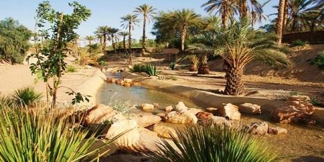 La FAO au chevet des oasis maghrébines | CIHEAM Press Review | Scoop.it