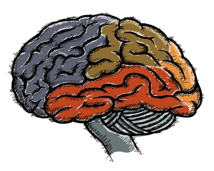 How the brain controls our habits | Knowledge Broker | Scoop.it