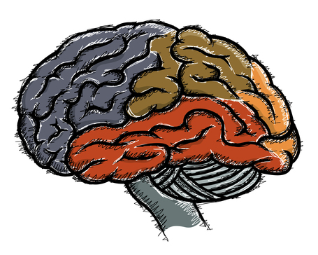 How the brain controls our habits | Scientificus | Scoop.it
