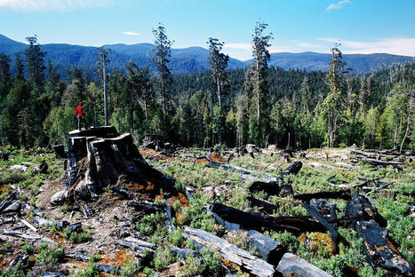 Tasmania's forests | Lauri's Environment Scope | Scoop.it
